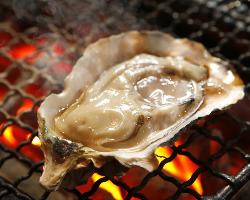 毎朝採れたての新鮮牡蠣。全国各地の牡蠣をその日にご提供