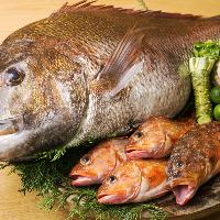 【新鮮魚介】 福井や愛媛の漁港より直送される旬の鮮魚
