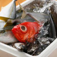 小田原漁港の朝獲れ鮮魚を、刺身や寿司など多彩な調理法でご提供