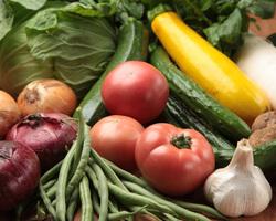 農家直送の新鮮野菜