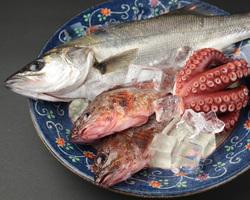 新鮮魚介類は三崎より直行