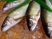 滋賀県産の鮎を是非囲炉裏で炙ってご賞味ください。