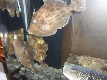 天然鮮魚 隠れ和食 ぶらん家