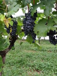 スペイン、フランス、イタリアのワイナリーより直接買付のワイン
