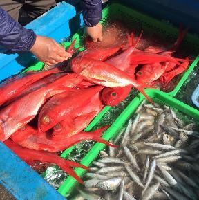 仲買人直営 ヤマヤ鮮魚店