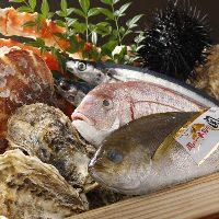鮮度抜群♪食べればわかるお魚の真の味!!!
