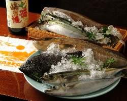 空輸で直送される伊豆七島の新鮮食材 ムロアジを刺身で出すことも
