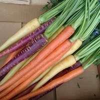 ◆野菜の味も楽しんでください◆