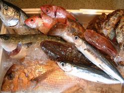 【近隣の漁港から直送される魚介】