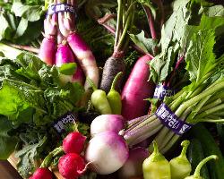 鎌倉の農家さんより直送の季節野菜。旬の食材をご提供します。
