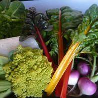 地元の農園の野菜や海産物など地産地消にこだわっています。
