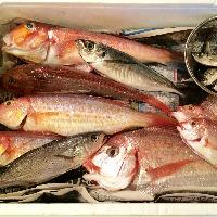 平塚の漁港で獲れたお魚をその日に調理、日ごとの旨い魚を提供◎