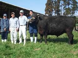 鹿児島の蔵元が愛情持って育てる薩摩牛のみを使用