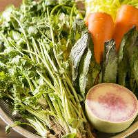 タイ料理に欠かせない香味野菜は鳥取の契約農家より届きます
