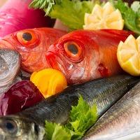 鮮度抜群の魚介類は三浦漁港から直接仕入れています