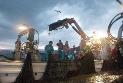 【漁師直結】今朝獲れた魚を夕方には関東で食べられる贅沢!