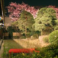 百余年の間、毎年美しい花を咲かせ続ける『高橋屋の百年桜』
