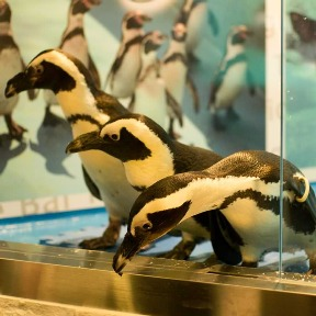 パーティーダイニング ペンギンのいるBAR 池袋店