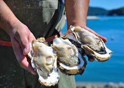 ◇毎日届く新鮮牡蠣 規格基準をクリアした牡蠣だけを使用