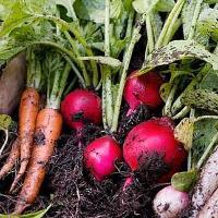 南は沖縄、北は北海道から取り寄せた野菜が人気です!