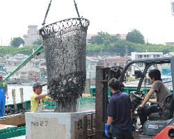 【漁港直送鮮魚】 漁港から直送しているので鮮度が違う!