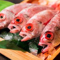【本日のおすすめ】 毎日売り切る獲れたて鮮魚は必食!