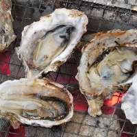 【新鮮馬刺し】 熊本の専門業者からお店へ直送!上質の馬刺し!
