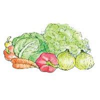 提携企業より無農薬野菜を仕入れ、安心・安全の品質です。