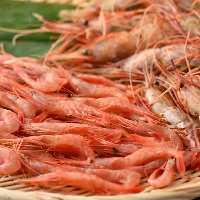 宇出津港市場から直送の鮮魚!