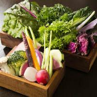 お鍋のお供は、千葉県内の契約農家から直送した朝穫れの野菜です