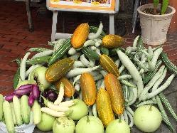 インド野菜(ヘビウリ・インドかぼちゃ・ナスなど)は自家栽培♪