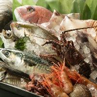 四季の魚をお楽しみください。