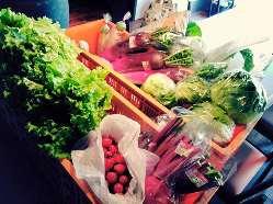 彩り鮮やかな木更津野菜、沢山入荷してます