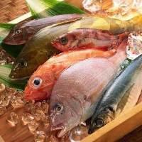 漁港直送の鮮魚が舌の上で踊る!こだわりの一品を味わい下さい!