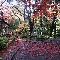 四季折々に美しく変化する庭園をお楽しみください。