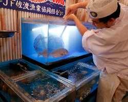 入り口すぐの水槽には、ピチピチ活魚や貝類も!
