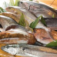 [五島列島直送鮮魚] 放血神経締めされた鮮度抜群の魚を福江より