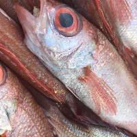 海のない群馬県で新鮮な魚介を楽しむなら当店にお越しください!
