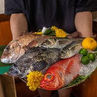 【朝獲れ鮮魚】新鮮な海産物を贅沢に味わえるお店です