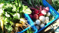 三浦の農家と直契約のこだわりの野菜。