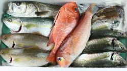 毎日、萩大島の漁師さん直送の魚は鮮度バツグン