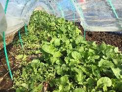 オーナー自ら栽培する自家製野菜