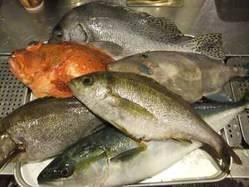 産地直送の新鮮な魚を使用しています。