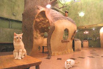Cat Cafe てまりのおうち image