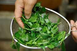 静岡産の厳選茶葉をパウダーにしたものを使用しています