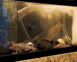 生け簀水槽で活魚を堪能!
