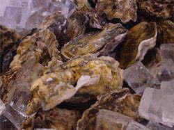 道内産の大きな牡蠣をご提供しております。濃厚でクリーミィ!