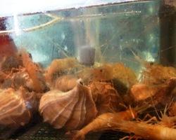 活きた魚貝類が並ぶ水槽! 自慢の海鮮は『活』が人気♪