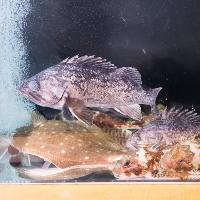 店内には生簀を完備。いつでも新鮮な魚を楽しめます。