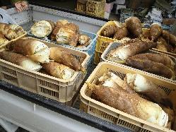 農家へ直接買い付ける筍!筍づくしコース7920円